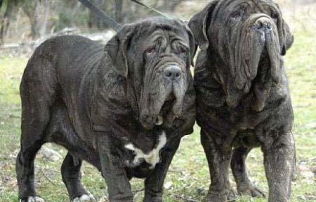 世界上最贵的狗