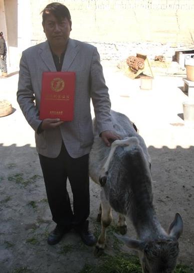 世界上最多脚的牛