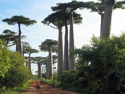 世界上最高的树