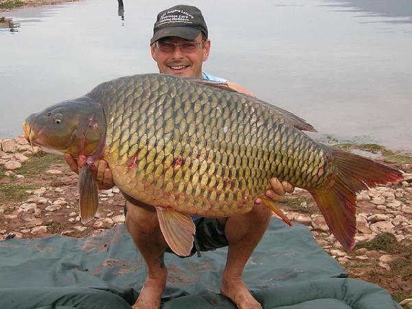 世界上最凶猛的淡水鱼,世界十大最凶猛的淡水鱼
