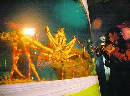 世界最大的螃蟹图片和资料