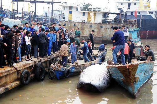 世界上最大的鱼,世界上最大的鱼是什么