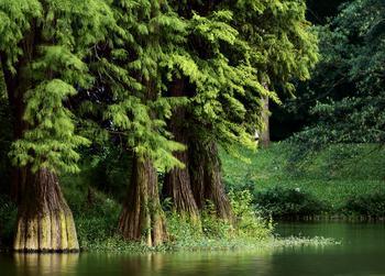 世界上最珍贵的树