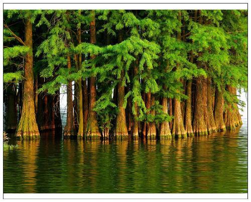 世界上最咸的树