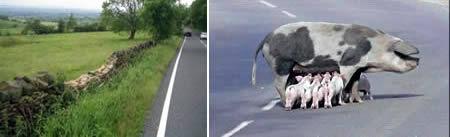 世界上最危险的公路