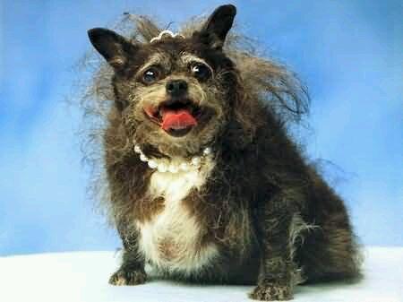 世界上最丑的狗
