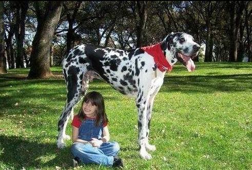 世界上最大的狗