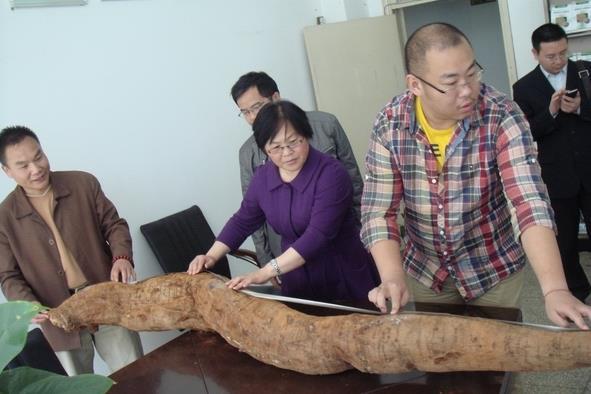 世界上最长的葛根