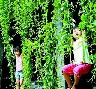 世界上最长的空心菜14米