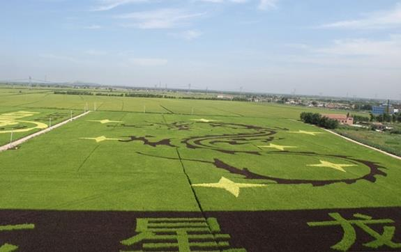 世界上最大的稻田画
