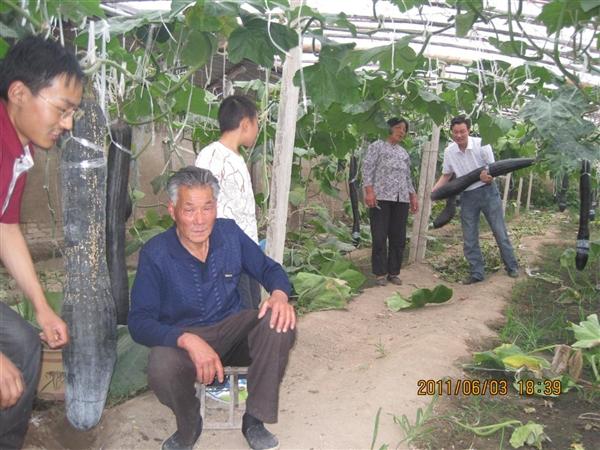 世界上最大的墨龙吊瓜