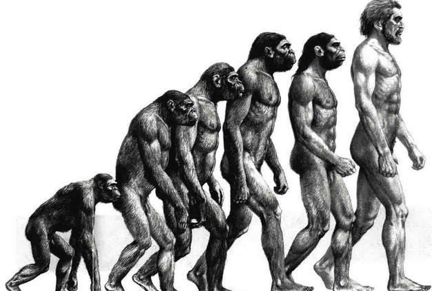 世界上最聪明的动物前十名 动物智商大战