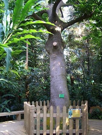 世界上最毒的树