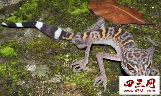 世界上最罕见的新物种,东方麒麟惊现人间