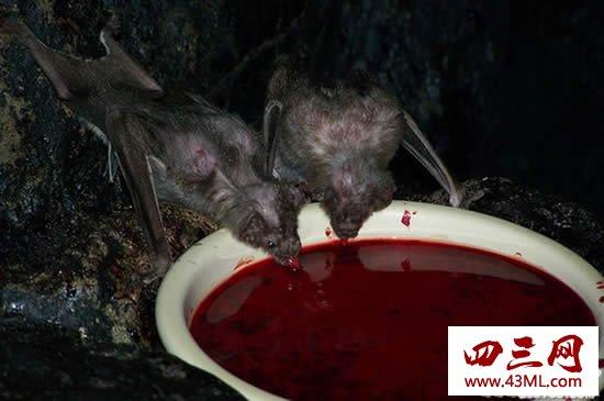 世界上最恐怖的动物,十大恐怖动物排行榜