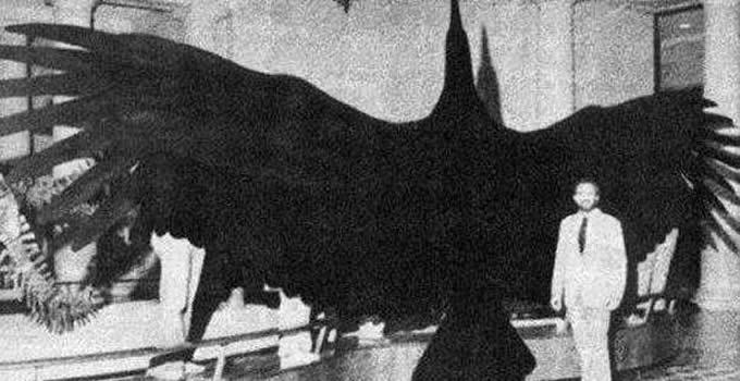阿根廷巨鹰还活着吗?