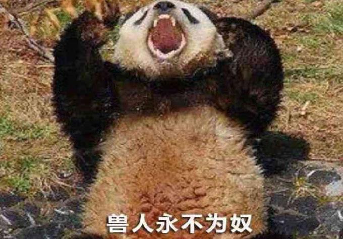 熊猫人永不为奴第一张图