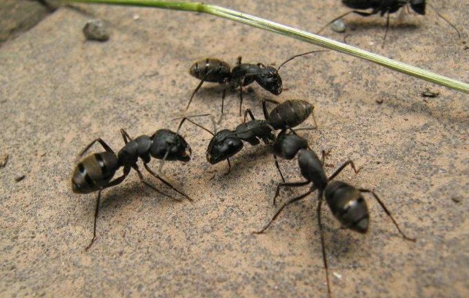 家里有蚂蚁是什么征兆