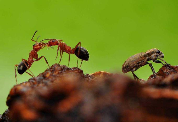 消灭蚂蚁最简单的办法有哪些