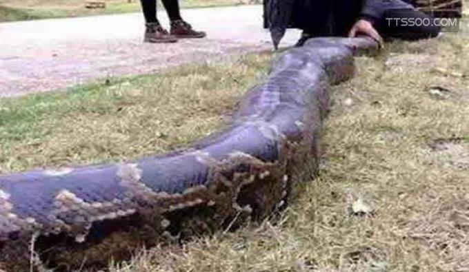 桂平挖蛇事件