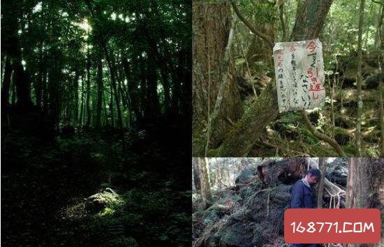 全世界最可怕的景点,日本自杀深林的尸骨堆积如山