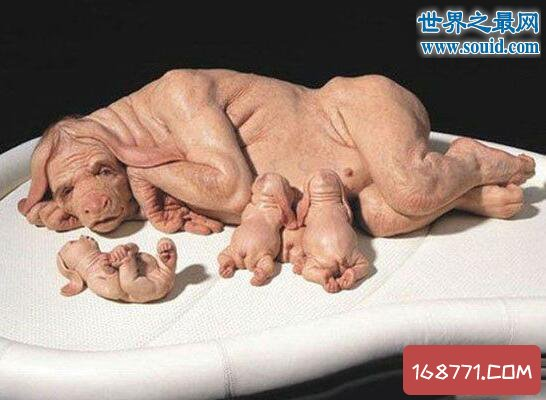 云南母猪生下8个小孩,人猪杂交根本不可能