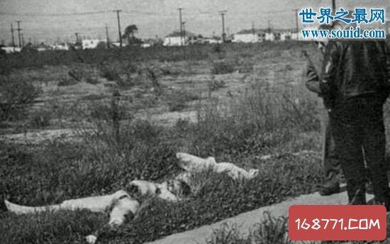 黑色大丽花惨案,最恐怖分尸案66年后找到凶手
