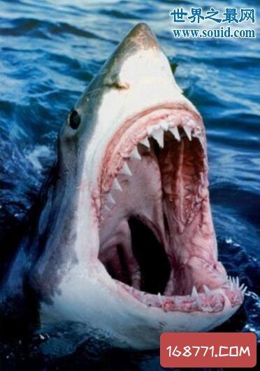 恐怖鲨鱼吃人图片,男子被袭击咬碎(九死一生)