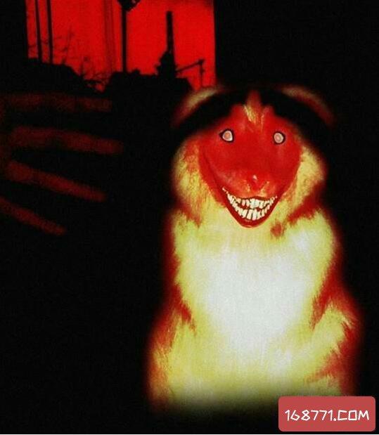 微笑狗smile dog恐怖原理,恐怖谷心理和恐怖故事