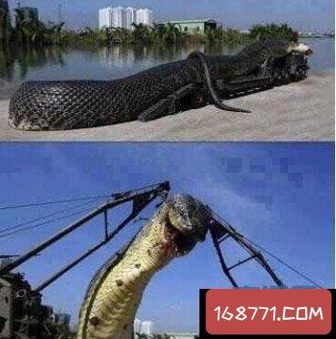 揭秘红海巨蛇 跟卡车一样大的巨蛇