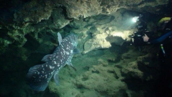 腔棘鱼灭绝了吗,现在还活着吗?