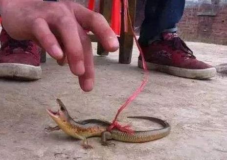 四脚蛇有毒吗