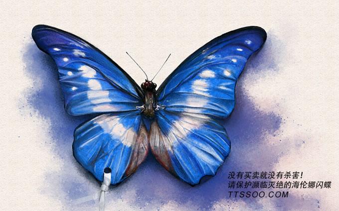 海伦娜闪蝶要灭绝了吗