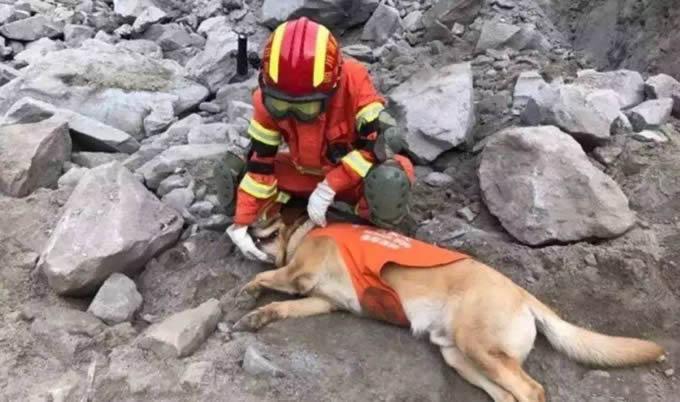 地震搜救犬全部处死