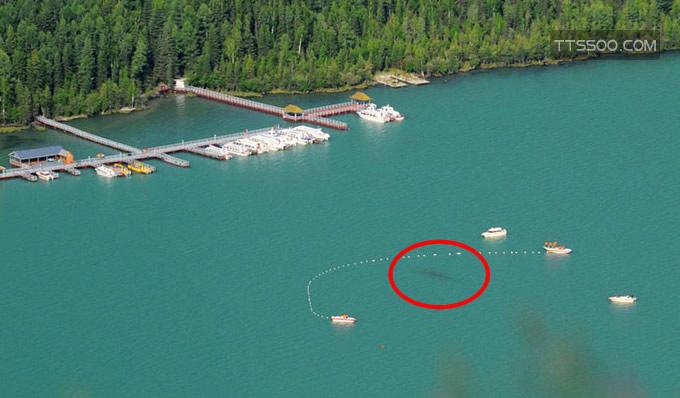 喀纳斯湖水怪真相揭秘