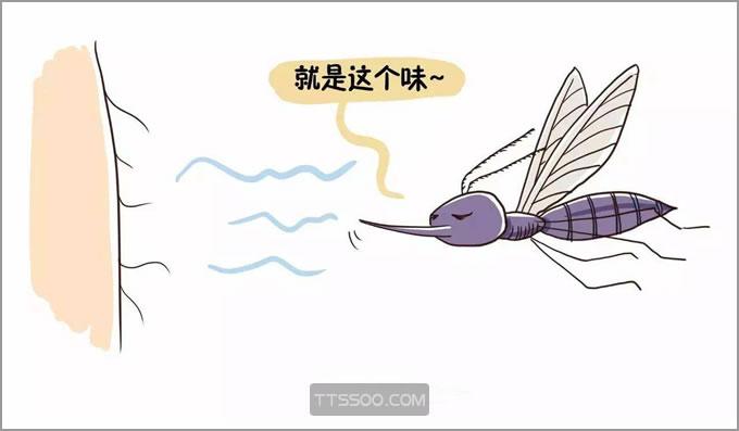 蚊子喜欢咬什么人