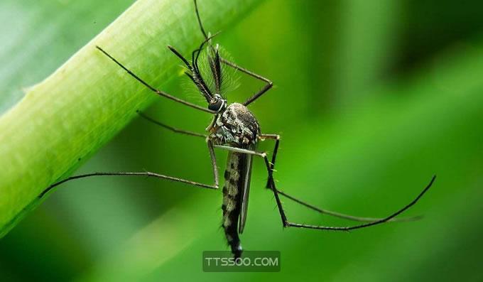 蚊子喜欢咬什么人跟血型有关吗