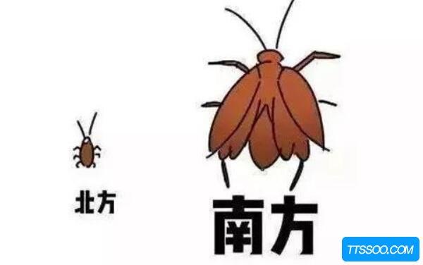 南方的蟑螂为什么会飞,有翅膀(北方蟑螂也能