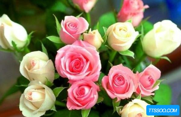 玫瑰与月季的区别,玫瑰花上刺多有毛(月季上刺大无毛)