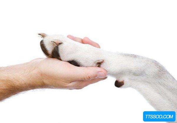 狗狗为什么会舔自己的爪子?难道只是为了卖萌吗