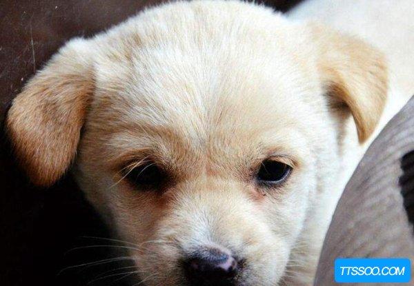 狗狗为什么会脱毛?狗狗脱毛的原因有哪些