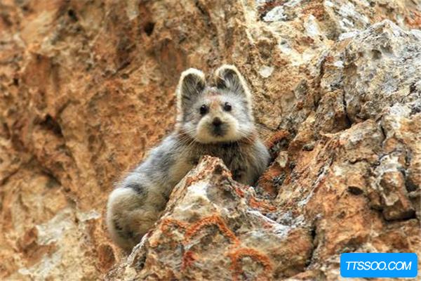 七个被发现的灭绝动物 第五是4亿年前活化石(存活至今)