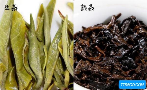 普洱生茶和熟茶的区别,夏喝生普清热减肥(冬饮熟普促睡眠)