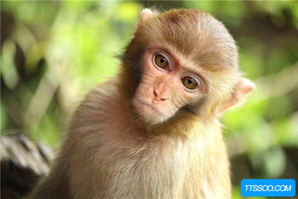 无限猴子理论起源于一本书 讲述背后的概率