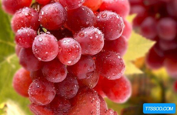 提子和葡萄的区别,吃提子不用吐籽(葡萄较酸提子偏甜)