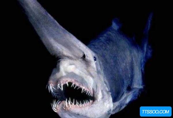 十种水下恐怖生物,五个外形恐怖五个巨大可怕(水滴鱼很恶心)