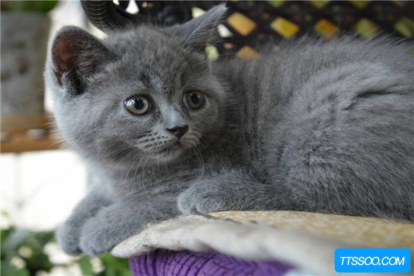 黄油猫悖论:绑着黄油的猫咪永远着不了地(无法实现)