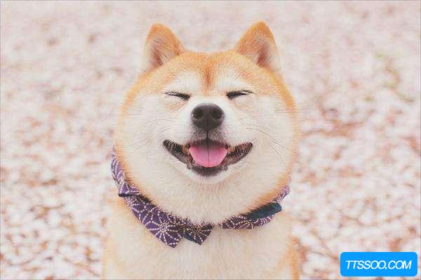 柴犬的祖先是什么