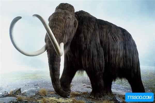 帝王猛犸象生活在极寒地带 雌象怀孕需要两年时间
