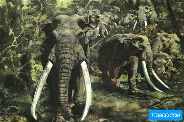 古菱齿象是体型最大的大象 一头成年象可达10-14吨
